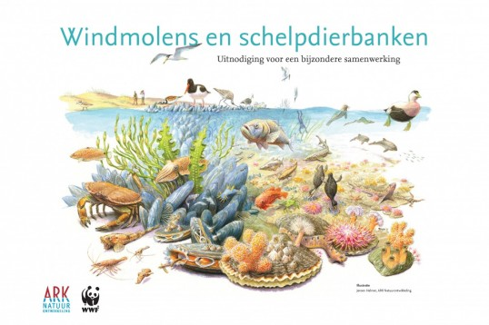 Windmolens en schelpdierbanken